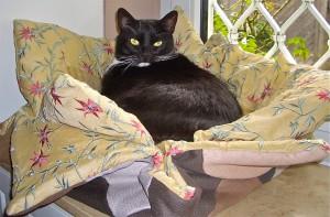 Katzenkörbchen 1 CIMG4105